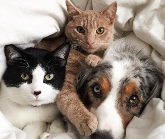 Mačka i pas zajedno leže
