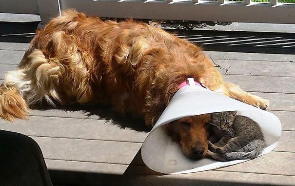 Mačka teši psa