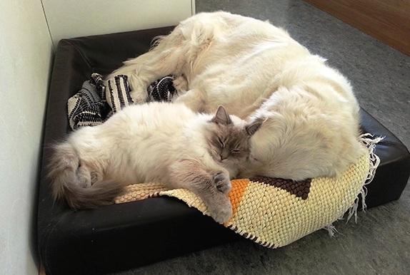 Mačka i pas zajedno u krevetu