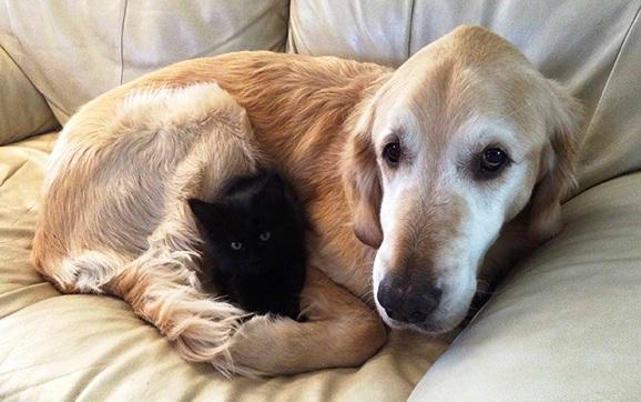 Pas i njegova maca