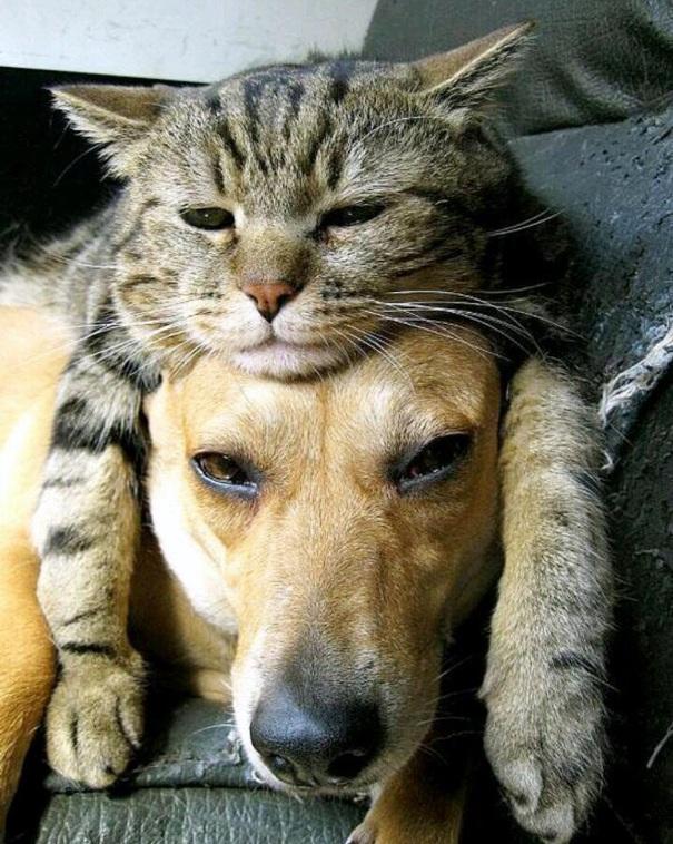 Mačka je šešir