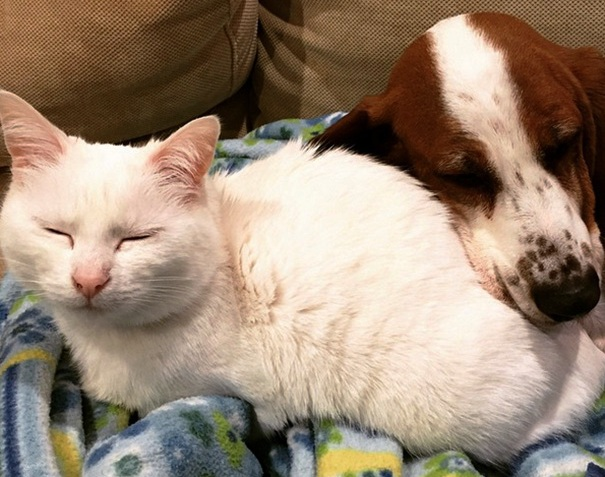Pas i mačka spavaju zajedno
