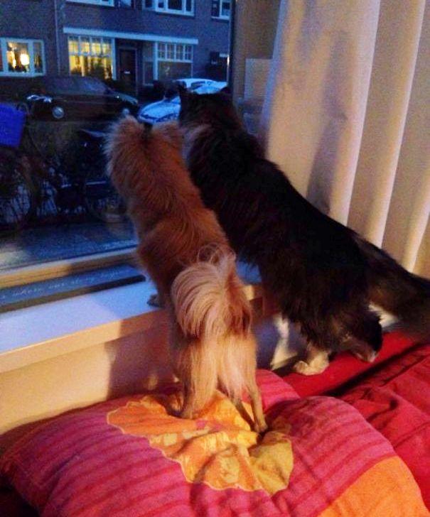 Mačka i pas gledaju kroz prozor