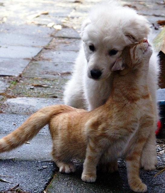 Mačka pozdravlja psa