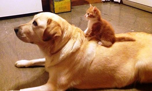 Mačka i pas čekaju zajedno
