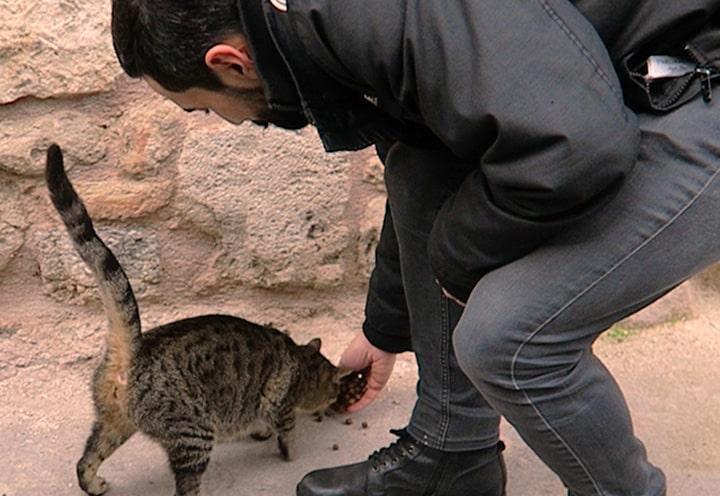 Čovak hrani mačku - Istambul