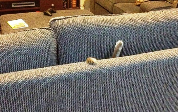 Gde je maca