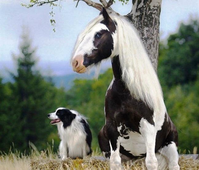 konj i koli cno beli
