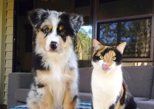 Koli i mačka iste boje
