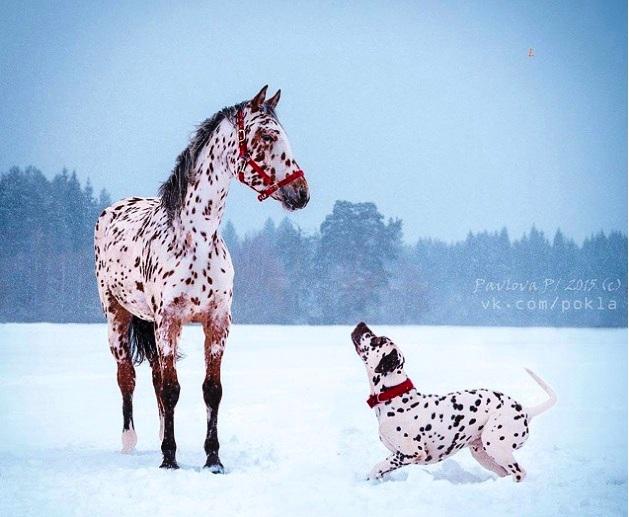 konj i dalmatinac iste boje