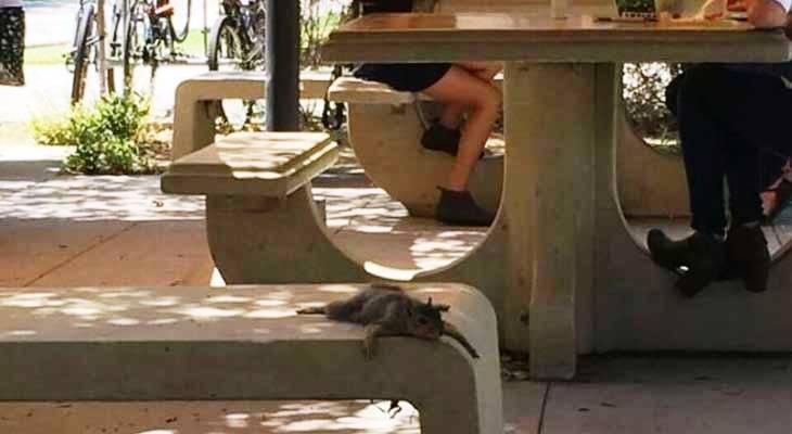Lenja veverica