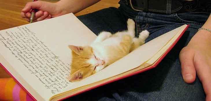Mace u knjizi