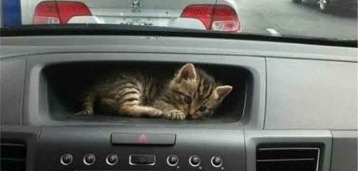 Mace u kolima