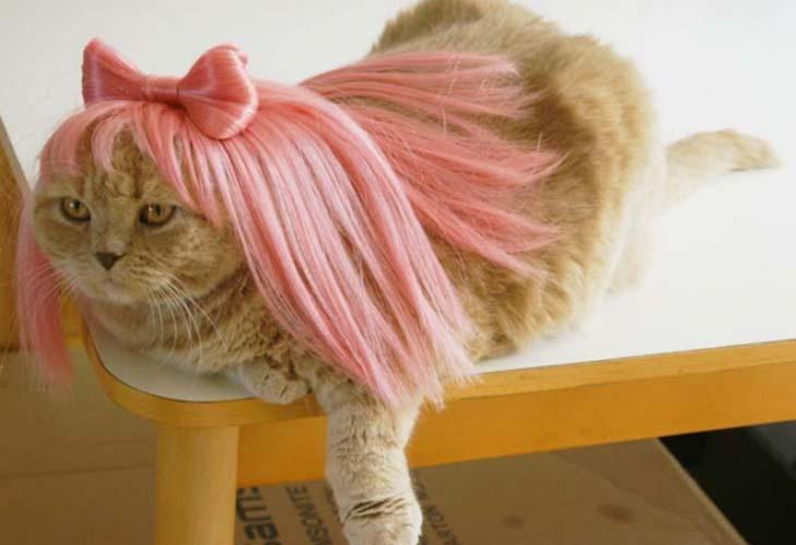 Mačka devica u horoskopu