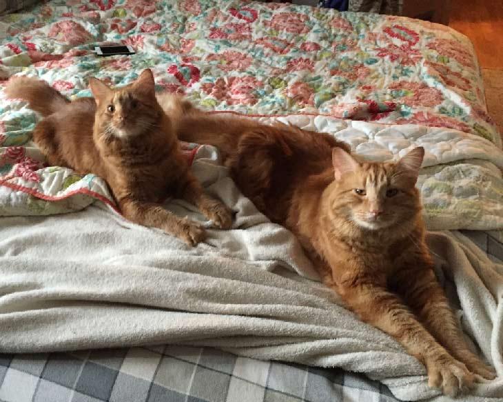 Mačka Evin i Mini na krevetu