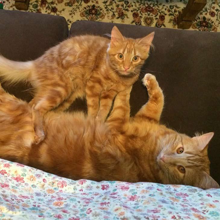 Mačka Evin i Mini se igraju