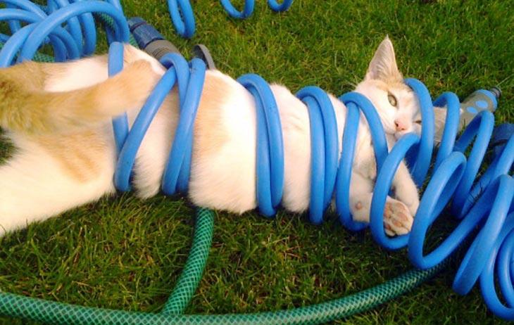 Mačka i crevo