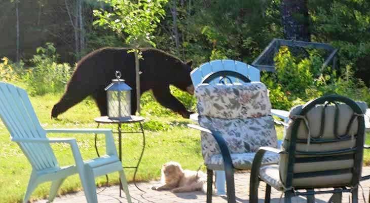 Mačka i medved