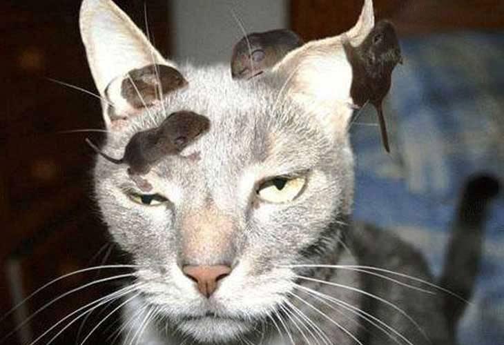 Mačka i miševi