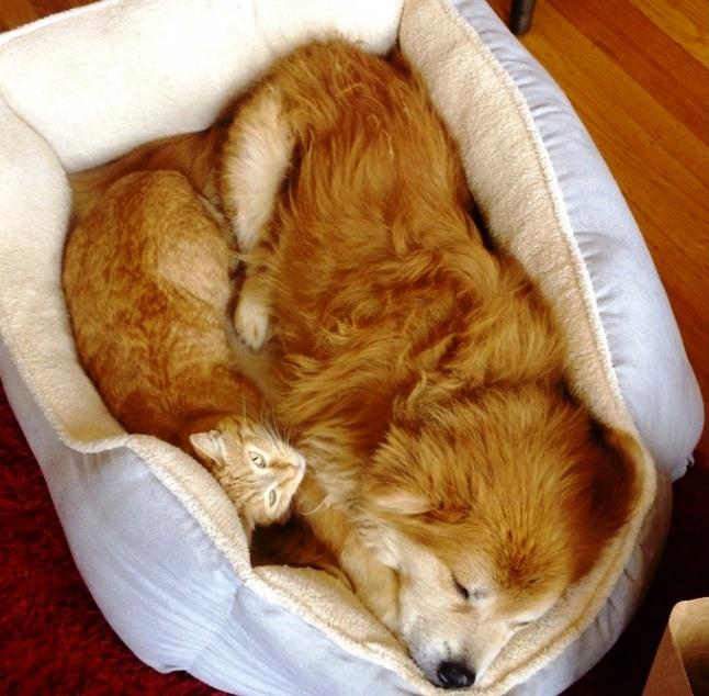 žuti pas i mačka