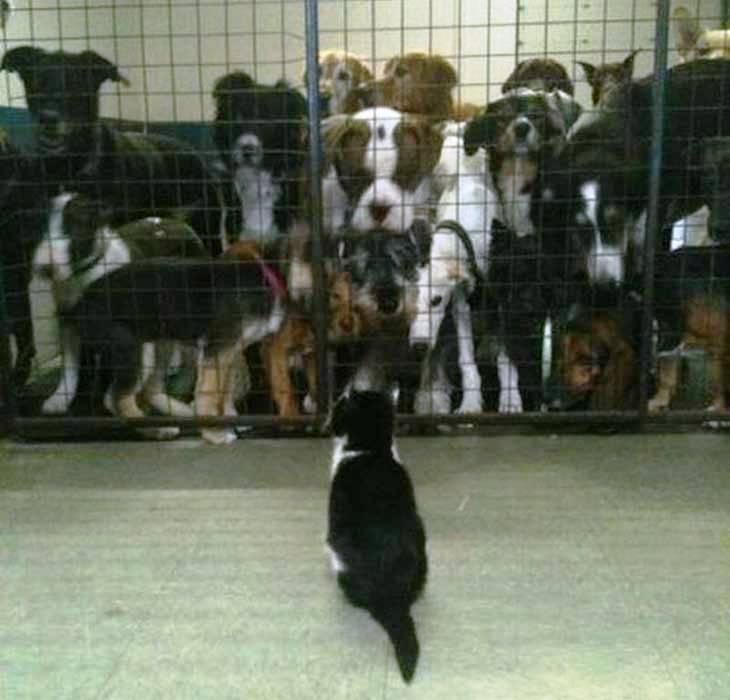 Mačka i psi u kavezu