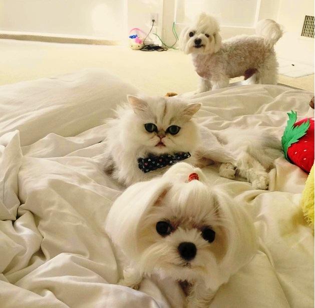 Mačka i maltezeri
