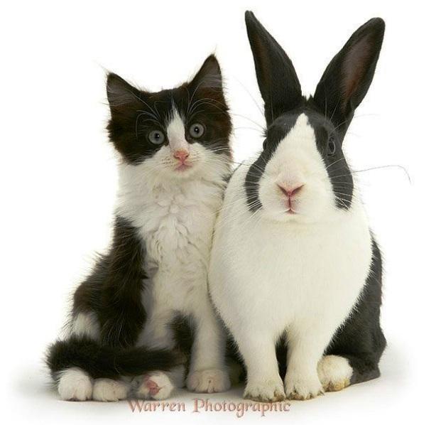 Zec i mačka