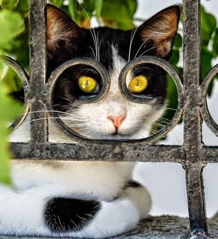 Mačka iza ograde