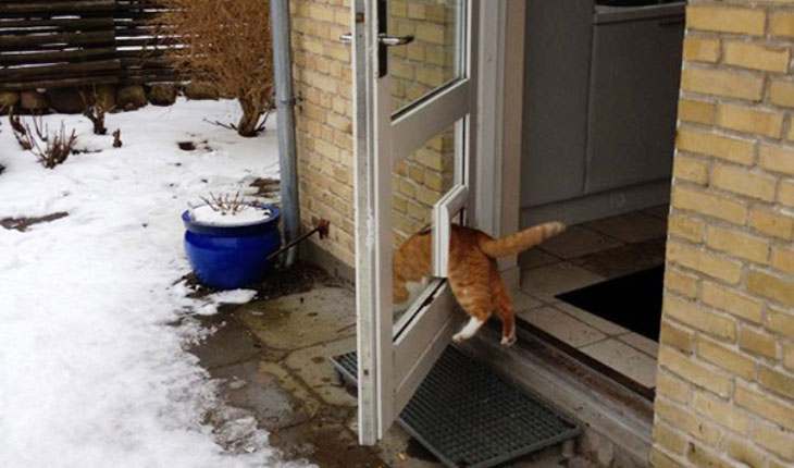 Mačka izlazi kroz vratanca