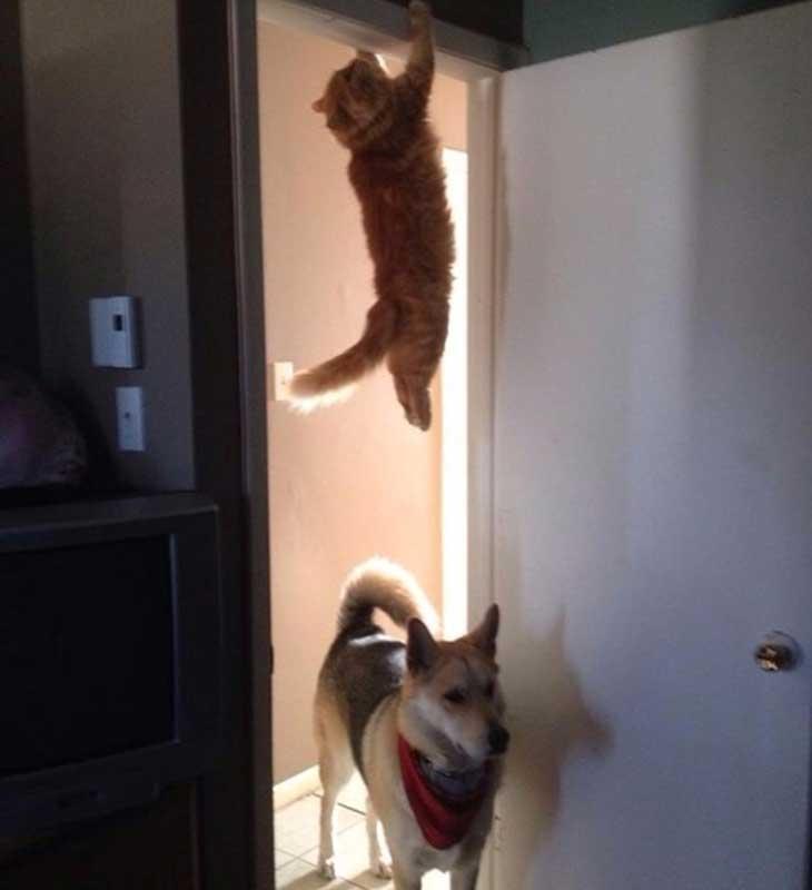 Mačka iznad psa