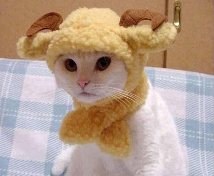 Mačka jarac u horoskopu