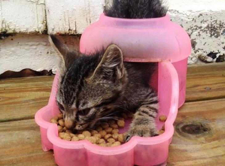 Mačka u hranilici