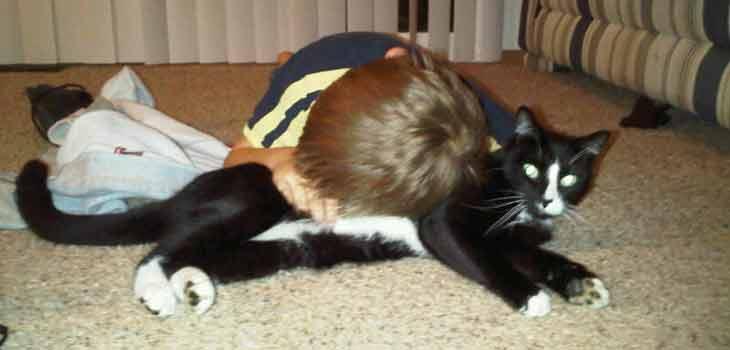 Mačka kao jastuk