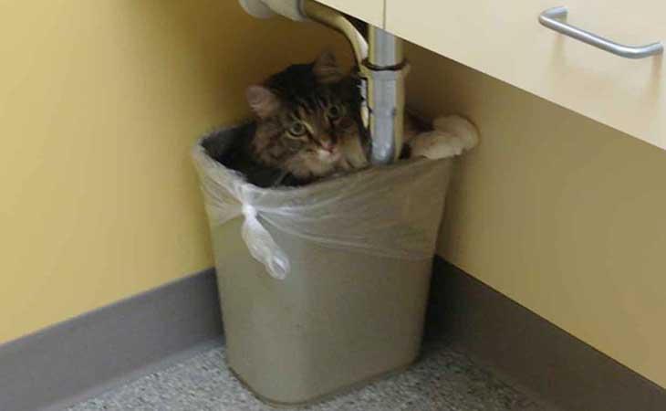 Mačka se krije u kanti