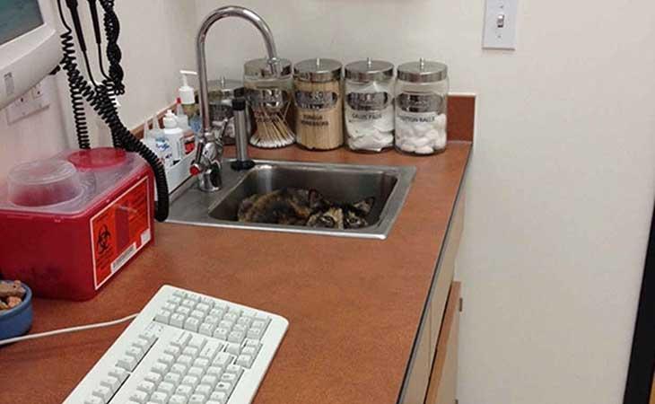 Mačka u sudoperi