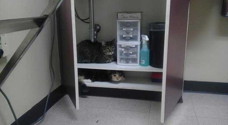 Mačke se kriju na polici