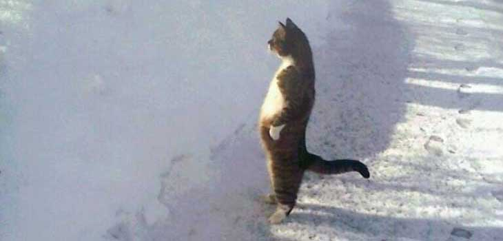 Mačka koja čeka