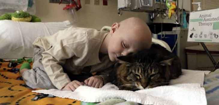 Mačka leči dete