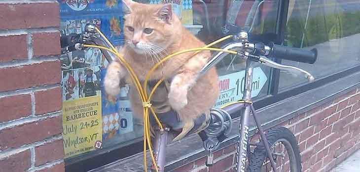 Mačka na biciklu