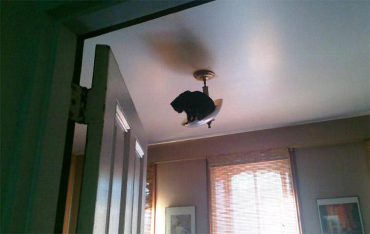 Mačka na lusteru