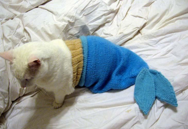 Mačka riba u horoskopu
