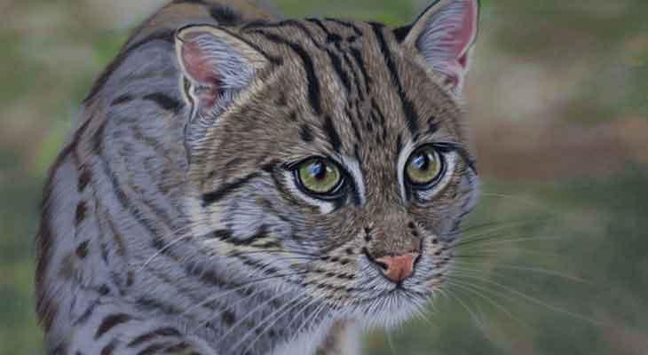 Retke divlje mačke - ribolovac