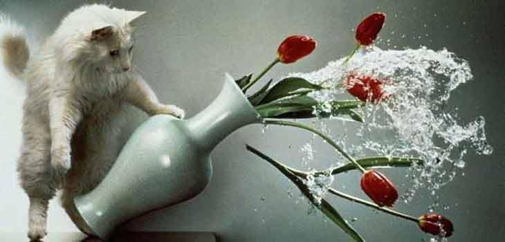 Mačka ruši vazu