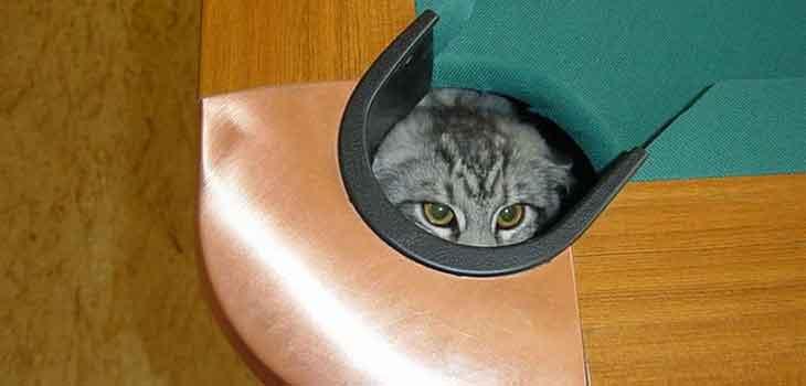 Mačka u bilijar stolu