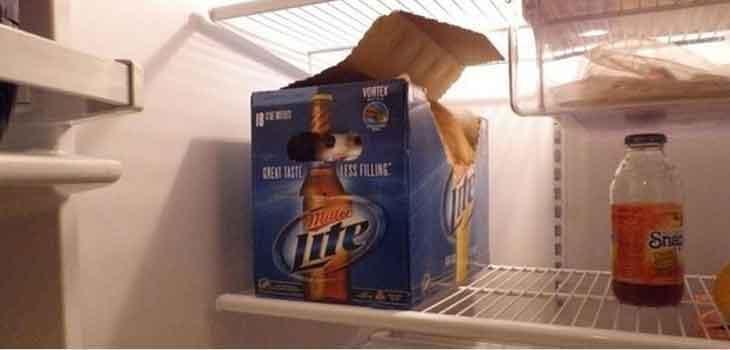 Mačka u frižideru