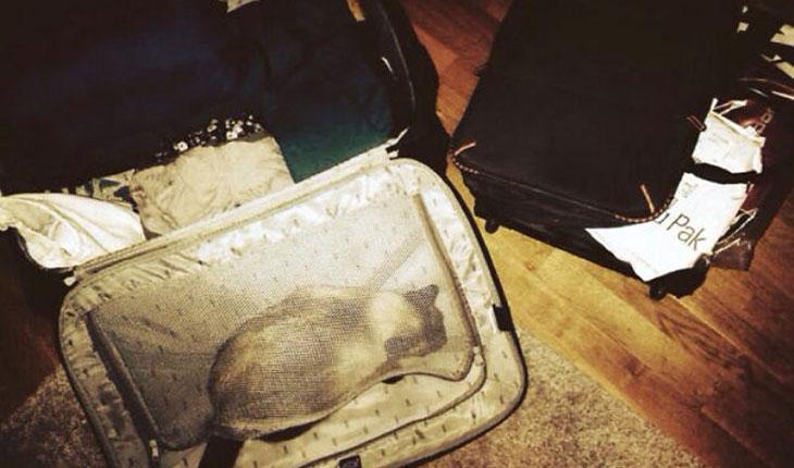 Mačka u koferu