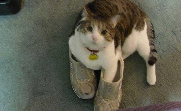 Mačka u papučama