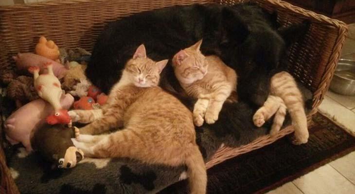 Mačke i pas leže