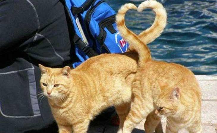 Mačke i srce