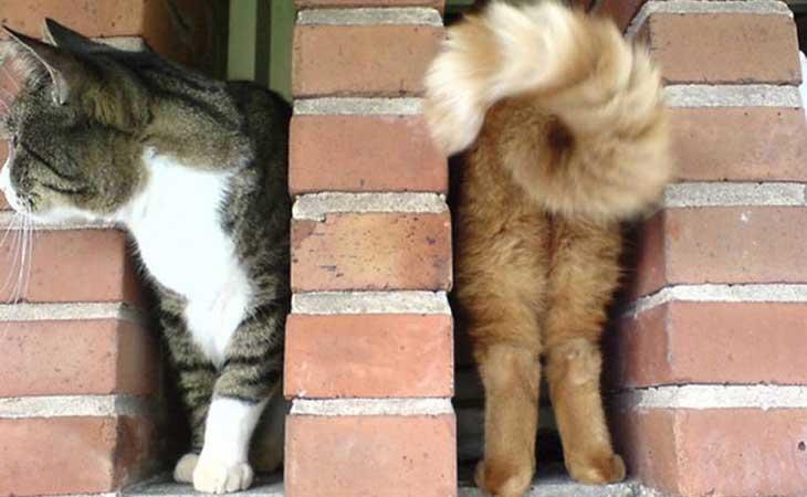 Mačke na zidu